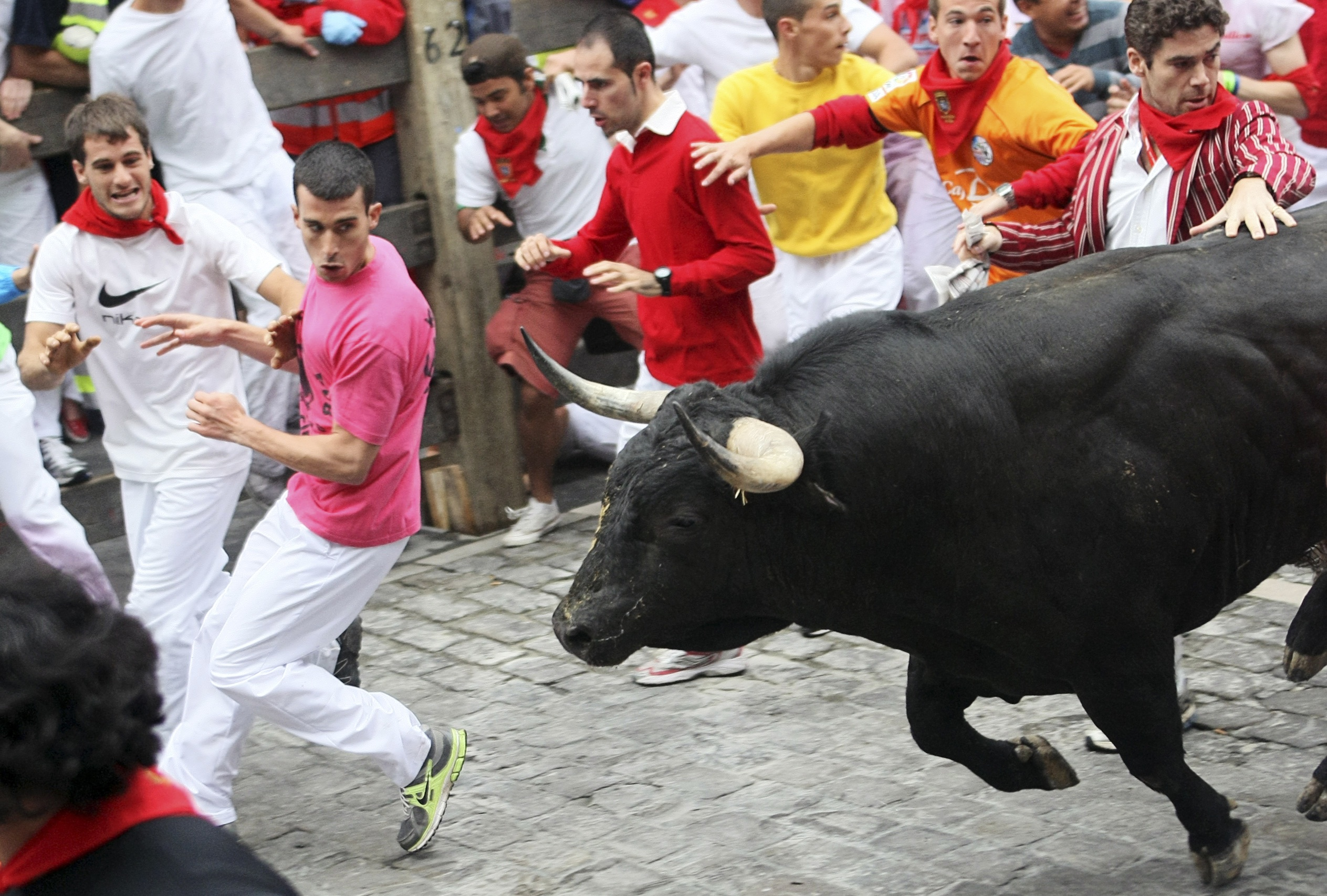 running of the bulls essay This is the definitive book on pamplona's fiesta and running of the bulls,  the  volume also essays the american experience from hemingway to the present.