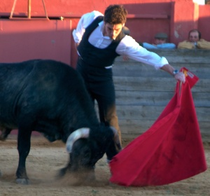 The author bullfighting on the estate of Enrique Moreno de la Cova, in the background alongside Antonio Miura, by Nicolás Haro, from Into The Arena: The World Of The Spanish Bullfight