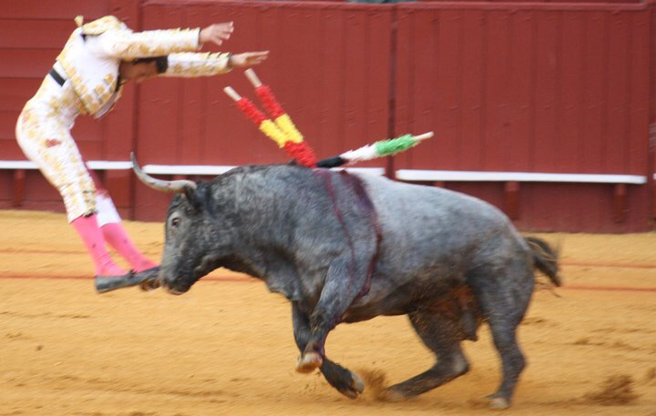 an essay on bullfighting Bullfighting good or bad does bullfighting represent the art and tradition of a culture, or is it simply a cruel slaughter of animals this show has.